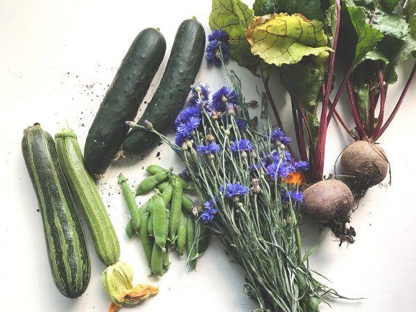 Einkochguise: Suppen, Saucen, gemüse und Obst ganz einfach einkochen